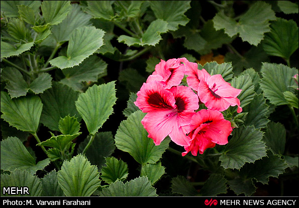Tehran Hosts Flower Festival
